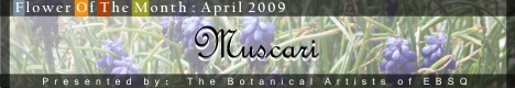 Banner for Flower of the Month: Muscari art show