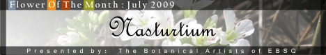 Banner for Flower of the Month: Nasturtium art show