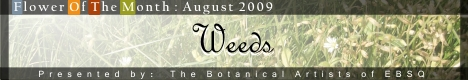 Banner for Flower of the Month: Weeds art show