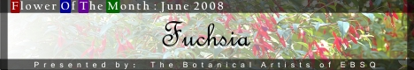 Banner for Flower of the Month: Fuchsia art show