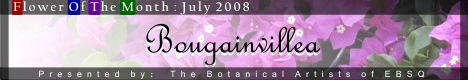 Banner for Flower of the Month: Bougainvillea art show