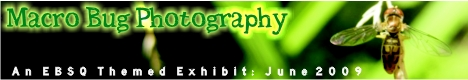 Banner for Macro Bug Photography art show