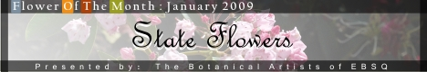 Banner for Flower of the Month: State Flowers art show