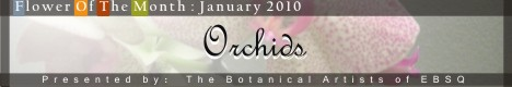 Banner for Flower of the Month: Orchids '10 art show