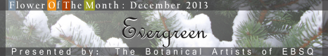 Banner for Flower of the Month: Evergreens art show