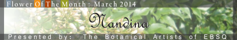 Banner for Flower of the Month: Nandina art show