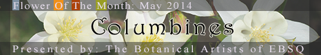 Banner for Flower of the Month: Columbines art show