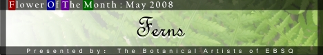 Banner for Flower of the Month: Ferns art show