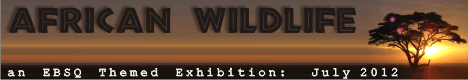 Banner for African Wildlife art show