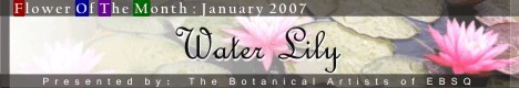 Banner for Flower of the Month:Waterlilies art show