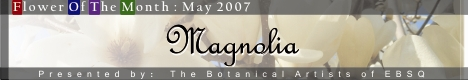 Banner for Flower of the Month: Magnolia art show