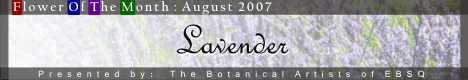 Banner for Flower of the Month: Lavender art show