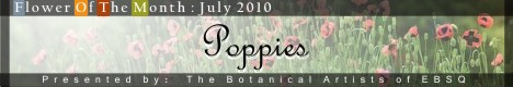 Banner for Flower of the Month: Poppies 2010 art show