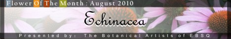 Banner for Flower of the Month: Echinacea 2010 art show