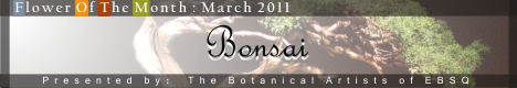 Banner for Bonsai art show