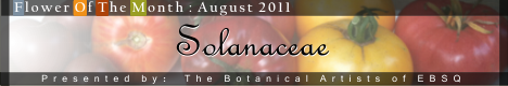 Banner for Flower of the Month: Solanaceae Family art show