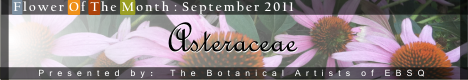Banner for Flower of the Month: Asteraceae (daisy family) art show