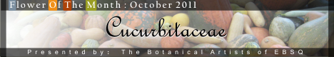 Banner for Flower of the Month: Cucurbitaceae art show