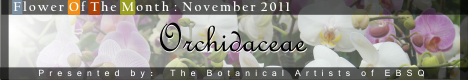 Banner for Flower of the Month: Orchidaceae art show