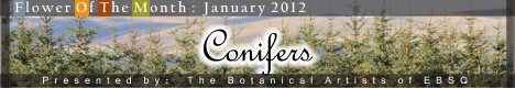 Banner for Flower of the Month: Conifers art show