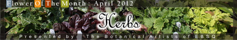 Banner for Flower of the Month: Herbs art show