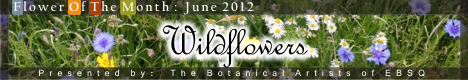 Banner for Flower of the Month: Wildflowers art show