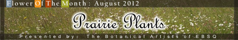 Banner for Flower of the Month: Prairie Plants art show
