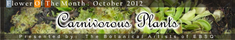 Banner for Flower of the Month: Carnivorous Plants art show