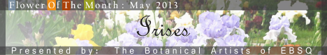 Banner for Flower of the Month: Irises art show
