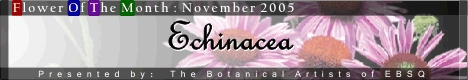 Banner for Flower of the Month: Echinacea art show