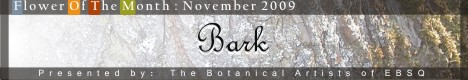 Banner for Flower of the Month: Bark art show