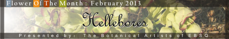 Banner for Flower of the Month: Hellebores art show