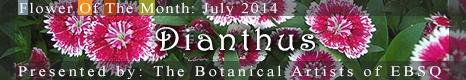 Banner for Flower of the Month: Dianthus art show