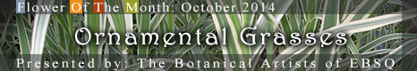 Banner for Flower of the Month: Ornamental Grasses art show